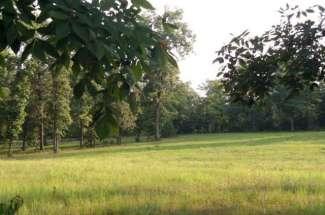 Three Runs Plantation
