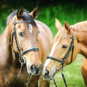 Horses in Aiken