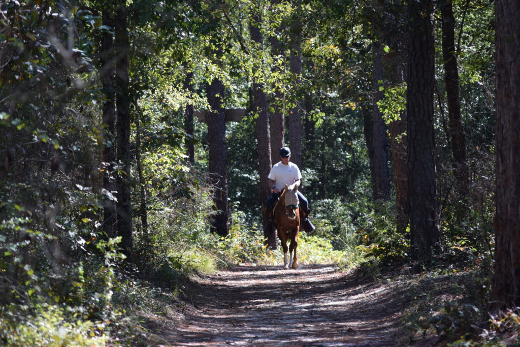 America's Best Equestrian Town - Aiken, SC HItchcock Woods
