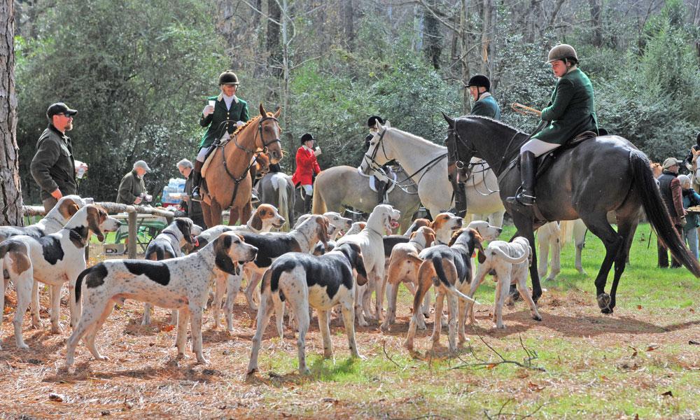 Aiken Hounds in Hitchcock Woods in Aiken, SC